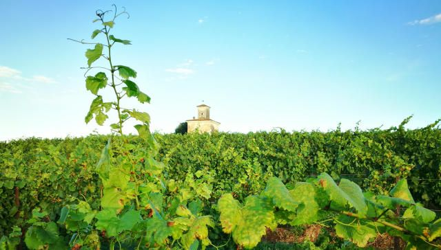 Get To Know Franciacorta Wine Maker in Italy